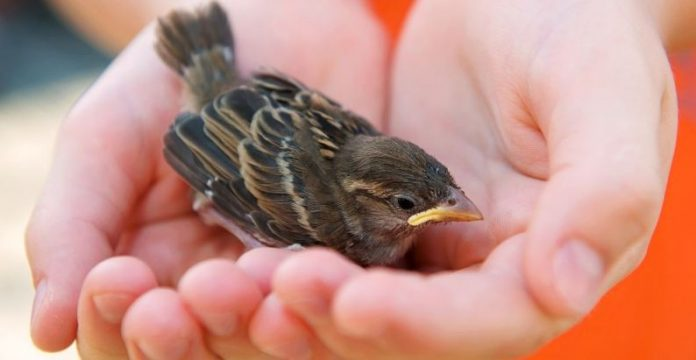 Rescue - What To Do When Kids Bring Home A Baby Bird