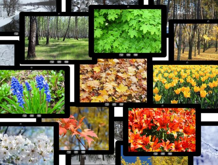 Select The Right Digital Image Format