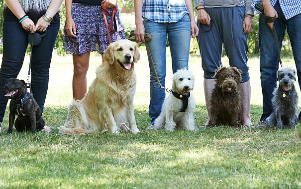 Dog Training Overview