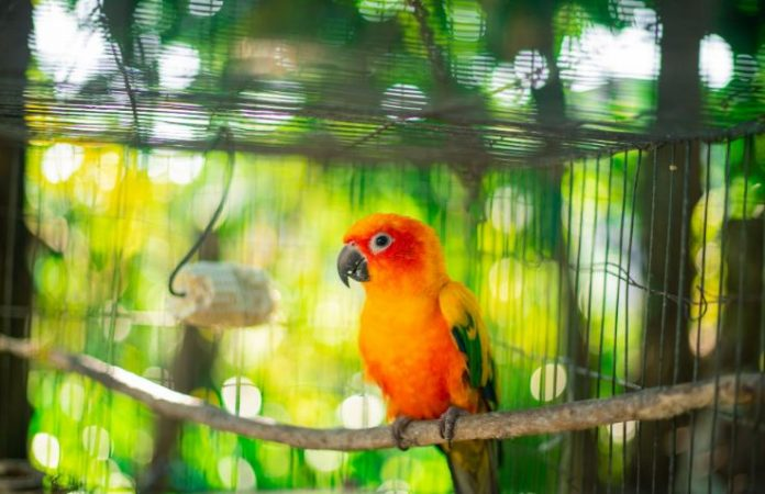 Nutrition In Order To Keep Your Pet Bird Healthy