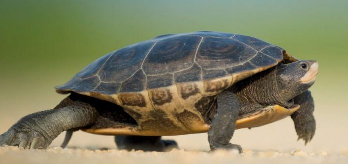 How To Take Better Care Of Your Pet Turtle