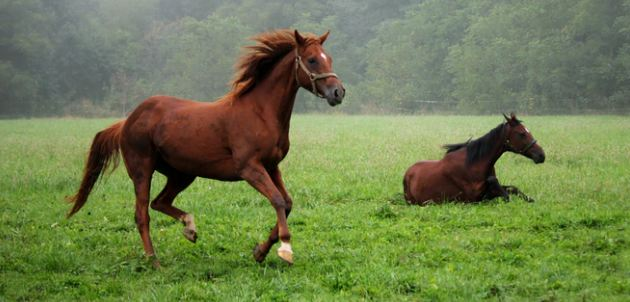 The Thoroughbred Horse