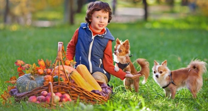 Teach Your Child To Be Safe With A Puppy