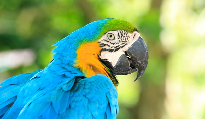 This image has an empty alt attribute; its file name is parrots.jpg