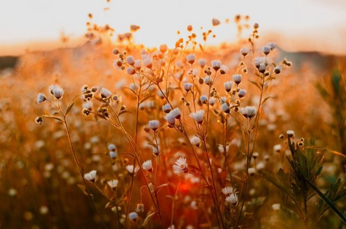 Worst Plants For People With Allergies
