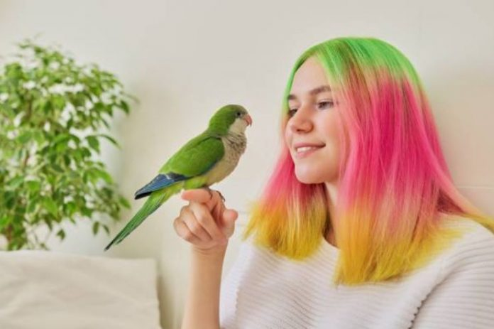 What To Know Before Buying A Pet Parrot