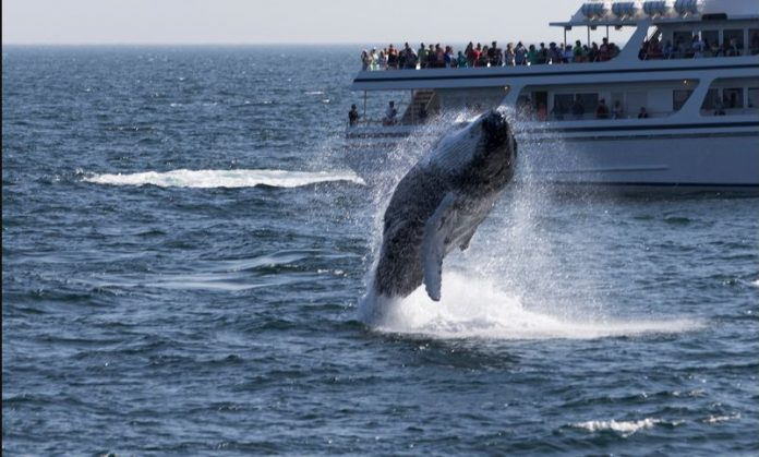 A Whale Watching Day In Monterey Bay