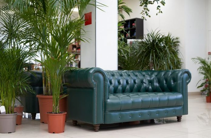 Tips On How To Select A Perfect Houseplant