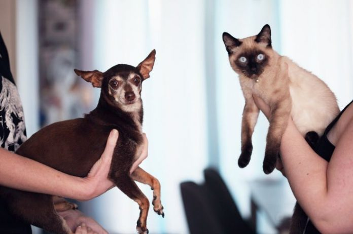 How To Ensure Your Pets Cats And Dogs