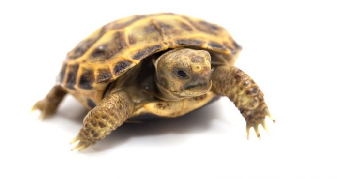 Turtles For Pets - What You May Not Know