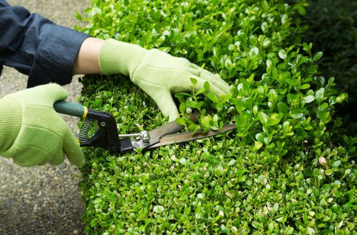 Clipper Clip: How To Prune Your Plants