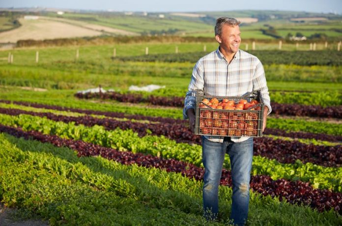 Why Is Urban Agriculture So Important And How Can We Profit From It