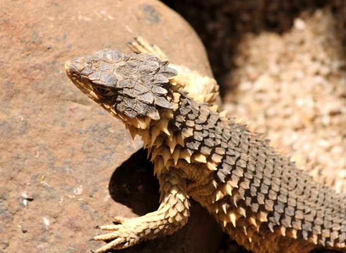 The Worst Reptiles And Amphibians You Should Not Pet
